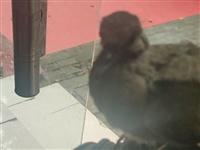 捡了个小斑鸠应该放到哪里?