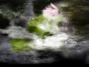 题图:那朵莲花(新韵)悠悠粲粲水云间,听雨观风心自闲。清静幽情痴夏雾,金乌玉兔也神牵。