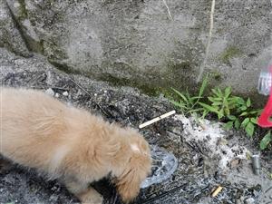 信丰小伙骑行西藏,救助一流浪狗还遇上骑友了,太幸运了!