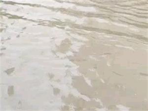 桃园今年第四次大水了,希望桃园物业和有关部门领导能想办法管理,今天中招这么大水,孩子们出进很不方便。