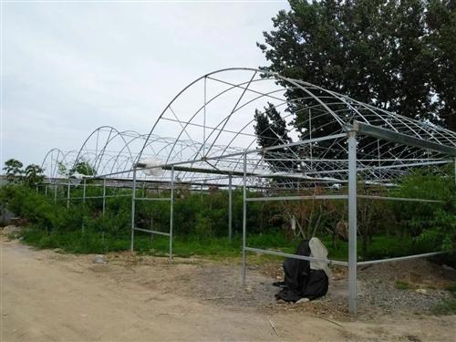 鍍鋅管三聯洞大棚,立柱高2.8,起拱1.8.每洞寬8米,三棟,600平,塑料膜**未拆封,