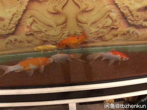 """出超大鱼缸一个,长度2.1米高80,只限临泉自提,带两个伊罕过滤桶 感兴趣的话点""""我想要""""和我私聊..."""