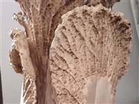 木雕白菜个人雕刻