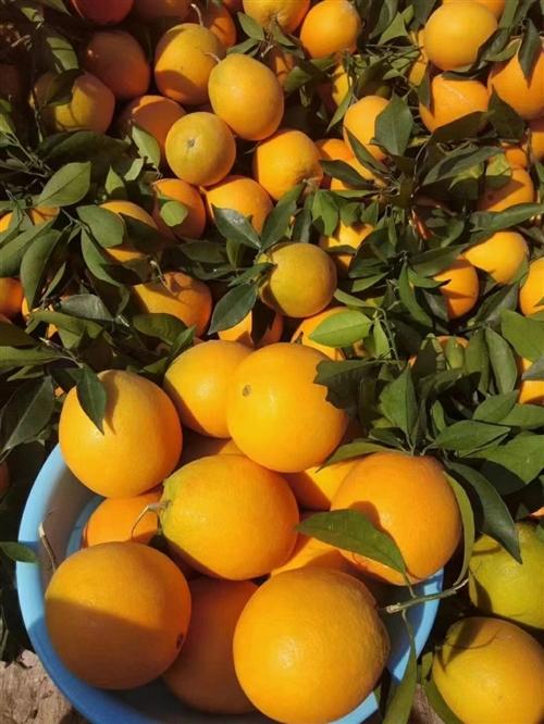 出售卖脐橙的三钻淘宝店