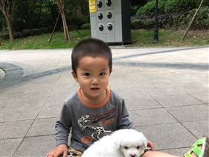 找人领养一只狗
