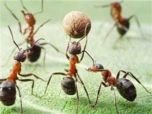 小蚂蚁搬家