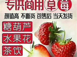 365天产地大量提供**草莓