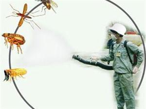 灭四害,除虫除蚁灭蟑螂,蚊子老鼠等