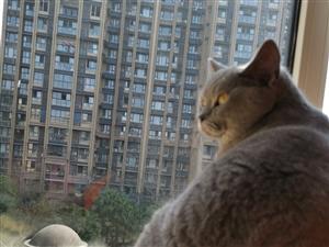 为爱猫寻一个家or寻寄养的地方