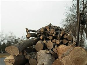 西安周边伐树木料危树处理