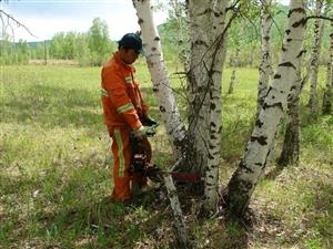 西安周边专业收树伐树处理危树