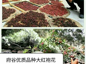 府谷王家墩**大红袍品种花椒