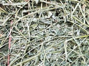 玉门苜蓿草价格 苜蓿草行情 甘肃苜蓿草