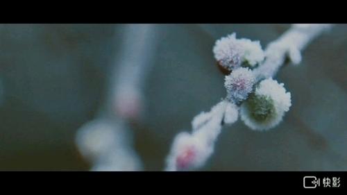 呼伦贝尔大草原《冬》
