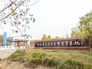 重磅消息!齐河县新增四项市级非遗项目