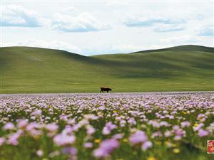 扎�特旗草原花如海