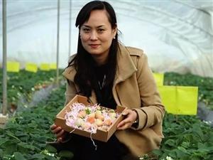 【农业人物】临潼新丰大桥附近的那片草莓,你了解它的故事吗?