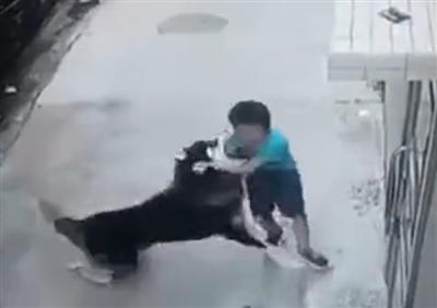 沿江小学附近小孩被狗咬