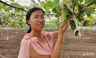 博兴曹王镇与中国农科院合力打造优质葡萄种植区
