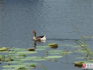 �\秋~武昌湖