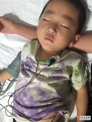 公益:救助陇南市礼县祁山乡夏集村3岁白血病患者夏星辰