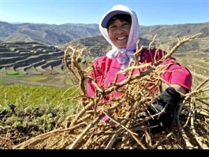 陇南――甘肃乃至全国最贫困地区之一基本解决了区域性整体贫困