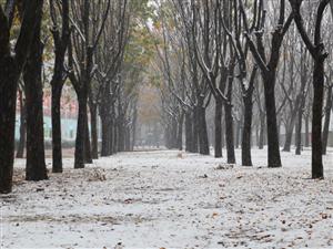 初雪�砝玻「纺嫌���2020冬天首�隼寺�降雪!