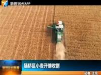 埇桥区小麦开镰收割