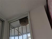 今天才�l�F窗�敉膺�就有一���R蜂�C,看著都��人。