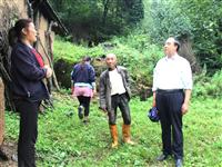 徽县积极推进农业保险,已赔付受害农作物保险金112万余元