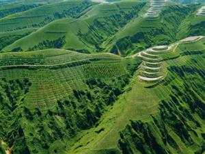 �西累�退耕�林�草4106�f�� 森林覆�w率�_45%以上