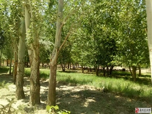 农业养殖和亲子庄园的开发