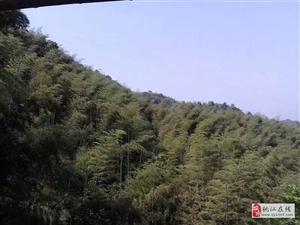 桃江县城东地块,离县政府大院仅两公里