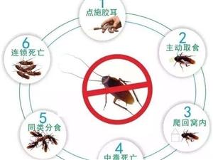 沈阳专业灭蚂蚁公司,沈阳灭蚂蚁公司