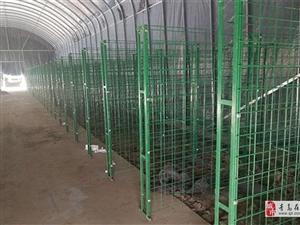 食用菌网架a胶州食用菌网架a食用菌网架生产厂家