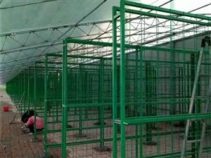 食用菌网架a崂山食用菌网架a食用菌网架生产厂家