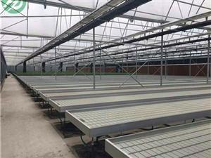 潮汐灌溉苗床系统好处以及适用范围