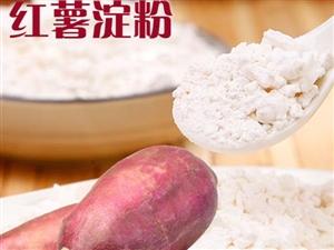 郑州港区南港双鹤湖附近大量出售红薯淀粉