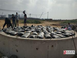 贵州毕节罐底防腐沥青砂施工简单