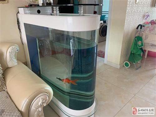 家用半年魚缸出售