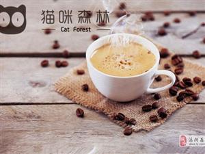 湯陰開一家貓咪森林加盟店怎么樣?