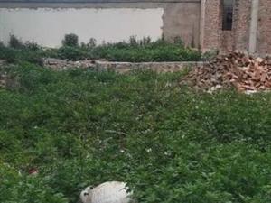 建水碗窑路口200米新州二院背后地皮出售