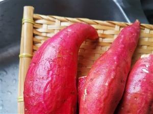 高山种植的西瓜色板栗红薯,上市啦!