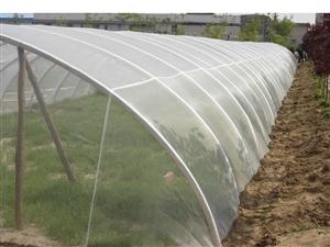 蔬菜种植防虫网白色纱网专用40-60目拉力好
