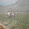 抗老化耐晒耐用蔬菜防虫网厂批大宽幅1-40米