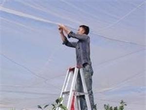 防虫网专用大宽幅密度好拉力好用于防虫防风好处多
