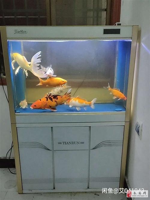出售自用鱼缸