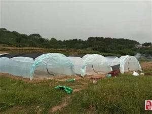 蚂蚱养殖拱形棚定做纱网厂批各种25目抗老化5年