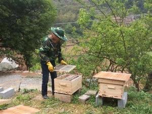 正宗的自家土蜂蜜出售