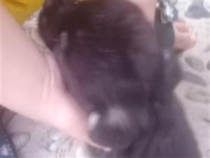 光州謦园,流浪狗一枚,,自来熟的那种,